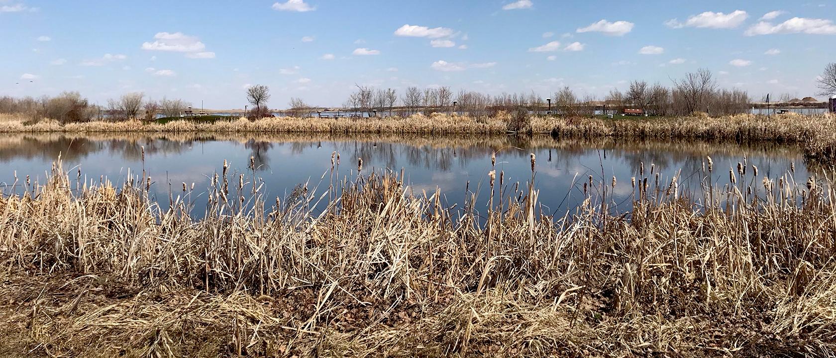 Wetland Marsh